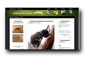 screenshot de www.myrmecofourmis.com